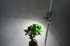 Driver-avec-plante