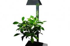 Lampe-avec-bonsaï-sur-fond