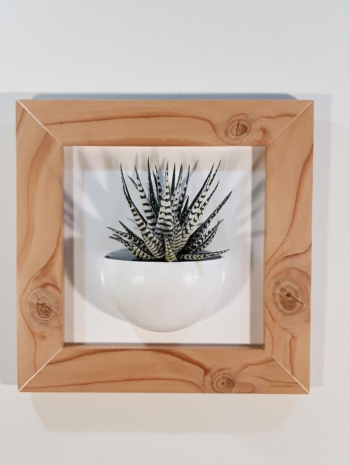 Cadre 24x24 bois succulente