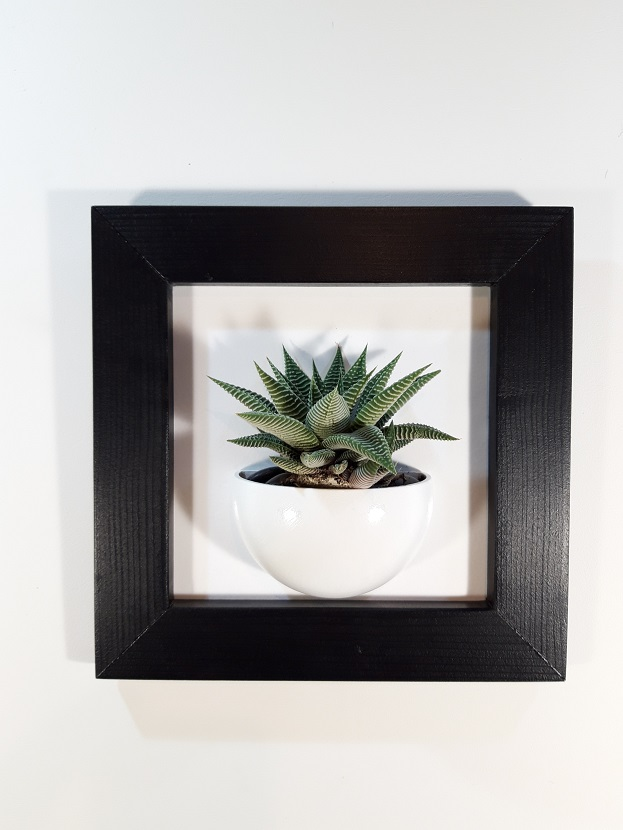 Cadre 24x24 succulente noir