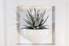 Cadre 24x24 succulente blanc 2
