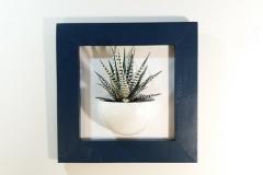 Cadre 24x24 succulente bleu