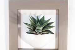 Cadre-24x24-succulente-brun