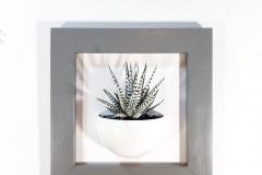 Cadre 24x24 succulente gris