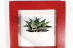Cadre 24x24 succulente rouge