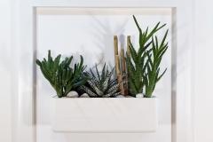 Cadre 44x44 blanc succulente