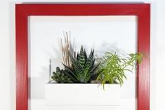 Cadre 44x44 rouge succulente