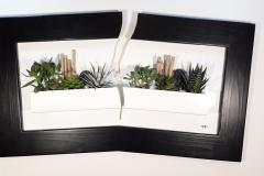 Cadre succulentes fissuré