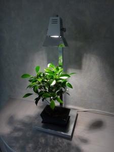 Lampe avec bonsaï